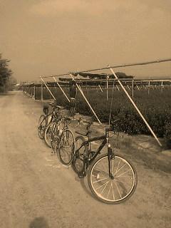 いつものサイクリングロード