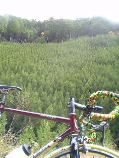 たまには北山杉の写真で