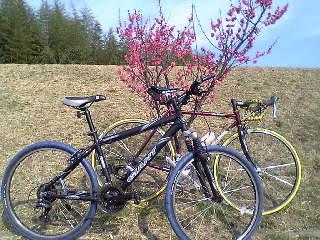 サイクリングロードに春が来た?