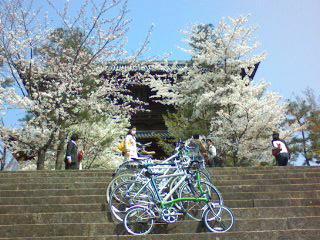 お花見サイクリング2